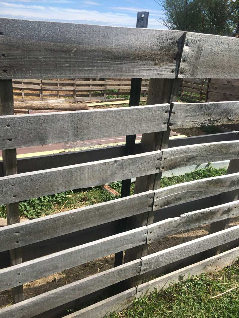 DIY fence pallets attached